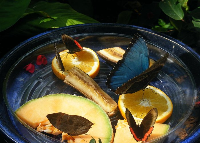 Butterflies Greeting Card featuring the photograph Feeding Time by James and Vickie Rankin