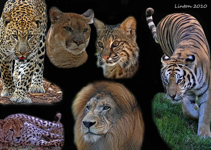 Feline Greeting Card featuring the photograph Feline Montage by Larry Linton