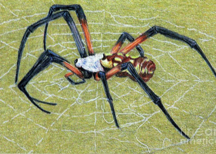 Fuqua - Artwork Greeting Card featuring the drawing Female Orb Spider -1 by Beverly Fuqua
