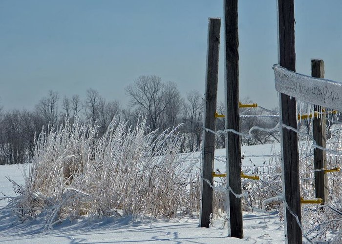 Weather Greeting Card featuring the photograph Fence Posts In Ice by Martie DAndrea