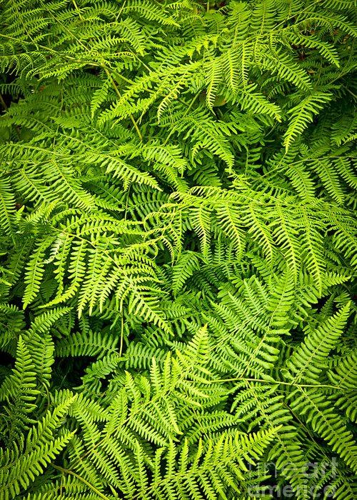 Fern Greeting Card featuring the photograph Fern by Elena Elisseeva