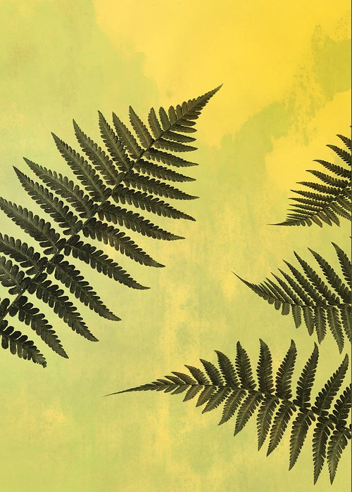 Fern Greeting Card featuring the photograph Fern Leaves 2 by Mark Rogan