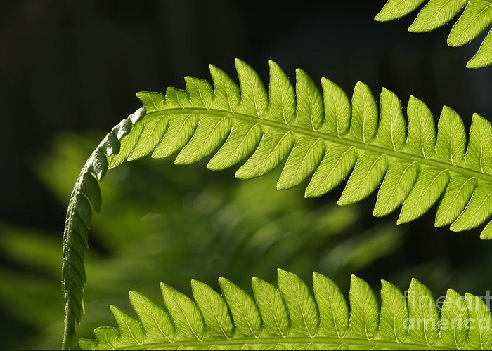 Garden Photo Greeting Card featuring the photograph Fern by Steve Augustin