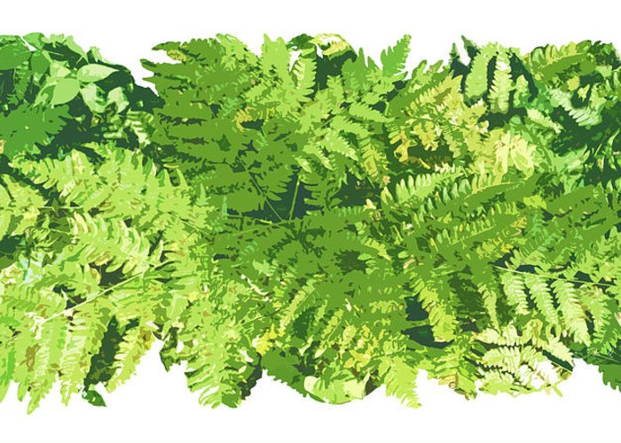 Fern Greeting Card featuring the painting Fern Vignette by JQ Licensing