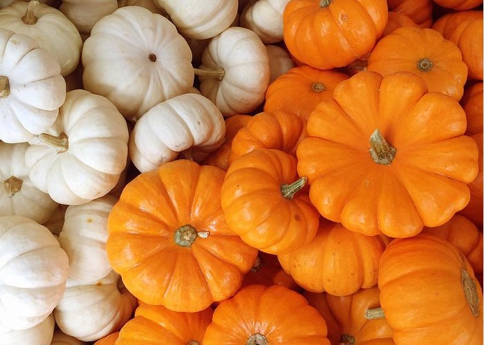Pumpkins Greeting Card featuring the photograph Festive Pumpkins by Onedayoneimage Photography