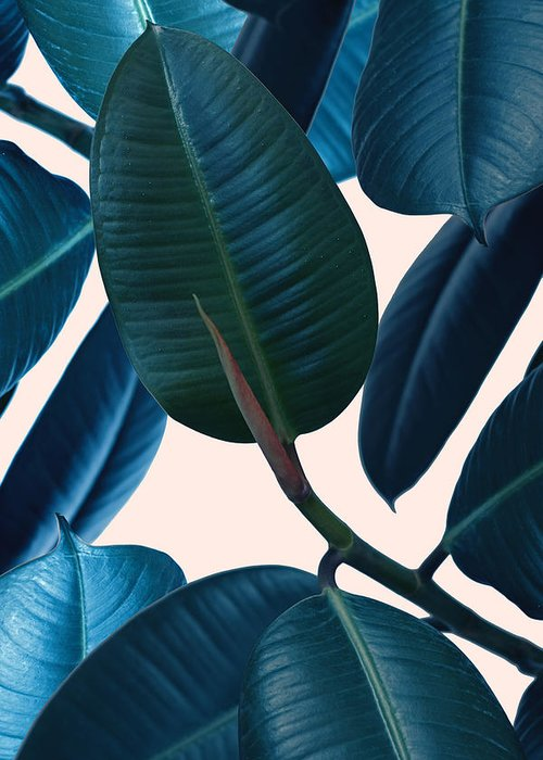 Summer Greeting Card featuring the photograph Ficus Elastica 2 by Mark Ashkenazi