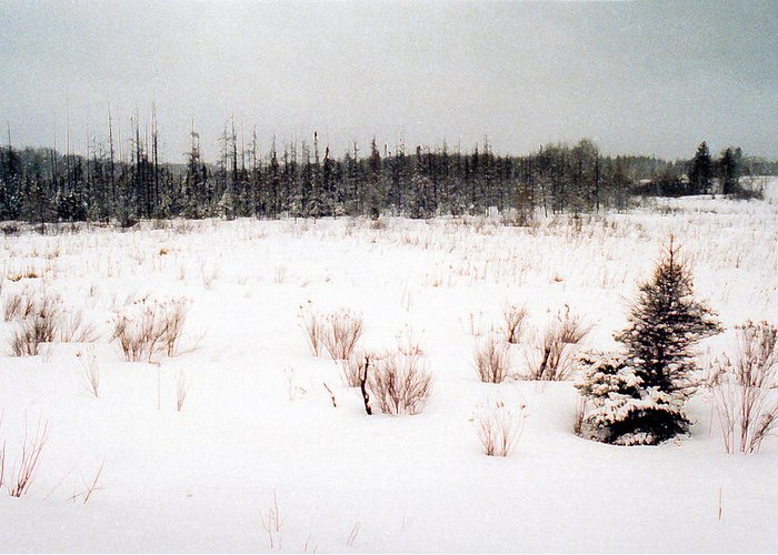 Landscape Greeting Card featuring the photograph Field By The Bush Ae by Lyle Crump