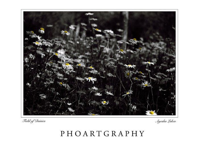 Flowers Greeting Card featuring the photograph Field Of Daisies by Ayesha Lakes