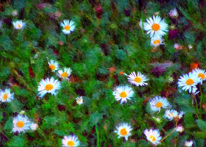 Digital Photograph Greeting Card featuring the photograph Field Of Daisys by David Lane