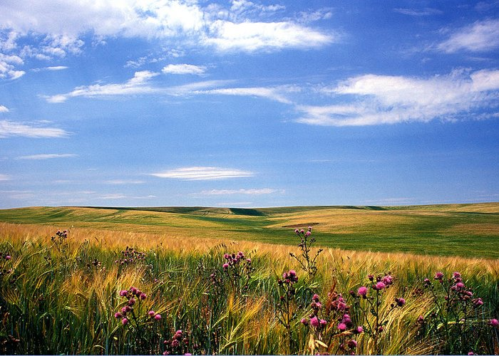 Landscapes Greeting Card featuring the photograph Field Of Dreams by Kathy Yates