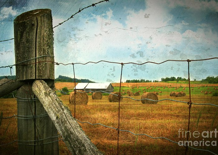 Agricultural Greeting Card featuring the photograph Field Of Freshly Cut Bales Of Hay by Sandra Cunningham