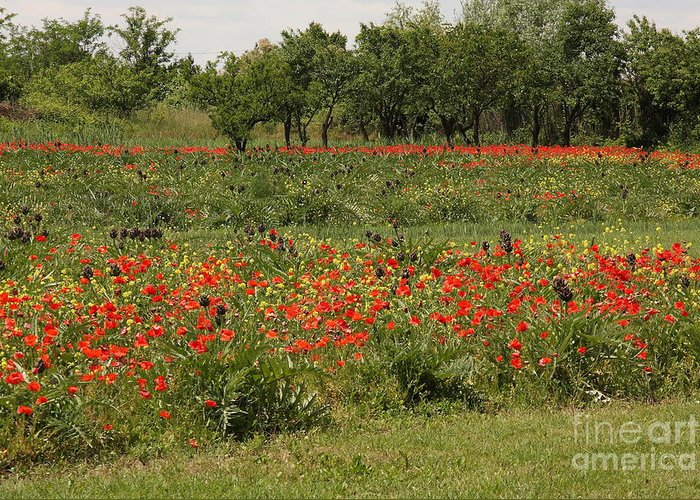 Flowers Greeting Card featuring the photograph Field Of Poppies On Torcello In Venice by Michael Henderson