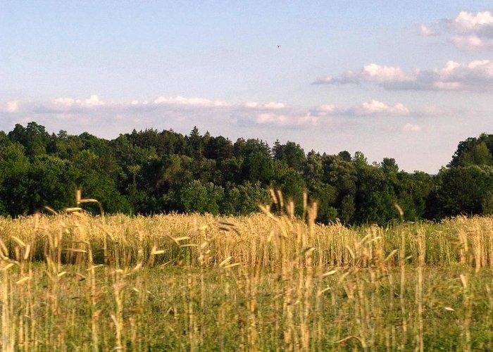 Field Greeting Card featuring the photograph Fields Of Grain by Rhonda Barrett