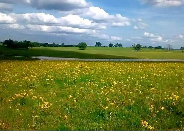 Less Greeting Card featuring the photograph Fields Of Yellow by Cindy Riley