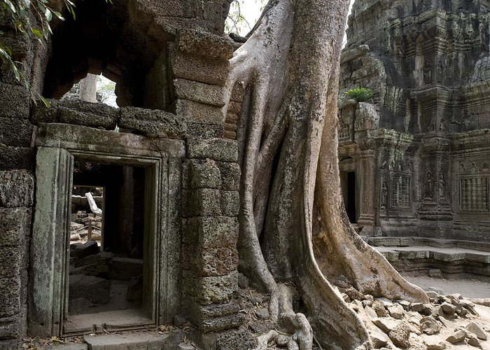 Day Greeting Card featuring the photograph Fig Tree Growing Over Crumbling Ruins by Rebecca Hale
