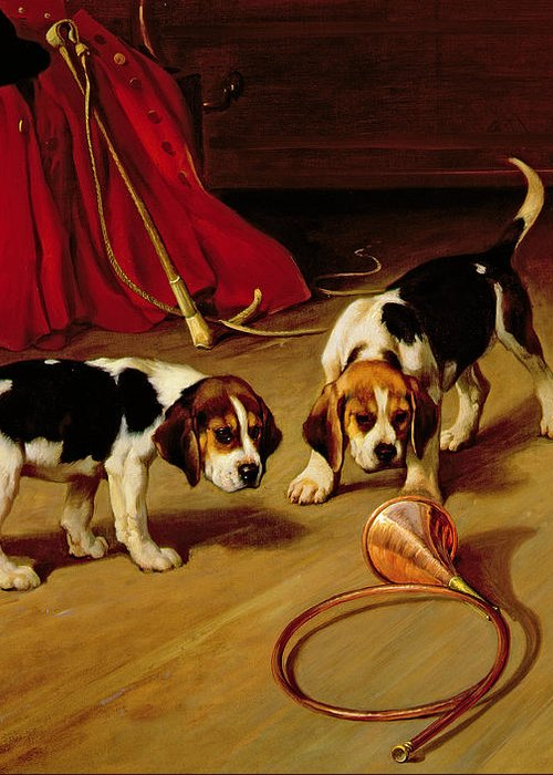 Beagle; Hound; Crop; Whip; Horn; Puppies; Hunt Greeting Card featuring the painting First Introduction by Wright Barker