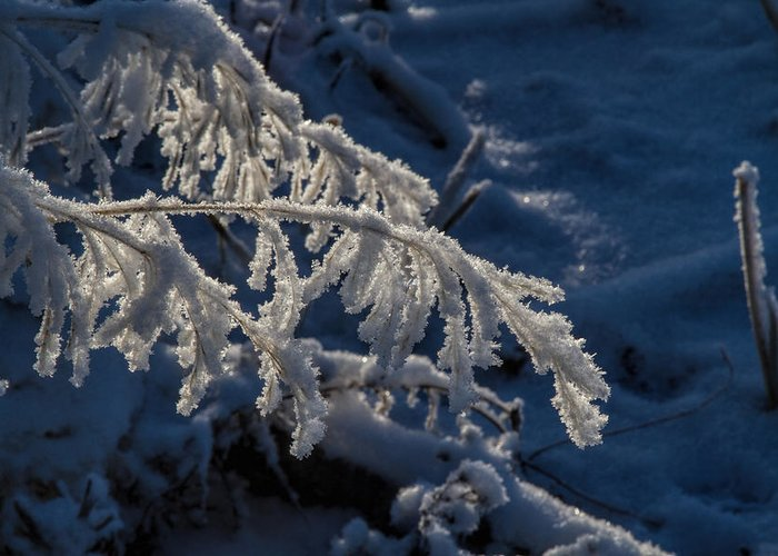 Frost Greeting Card featuring the photograph First Light by Alana Thrower