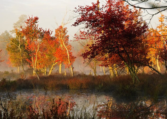 Landscape Greeting Card featuring the photograph First Light At The Pine Barrens by Louis Dallara