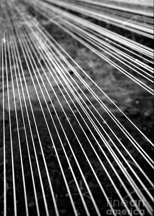 Abstract Greeting Card featuring the photograph Fishing Lines by Gaspar Avila