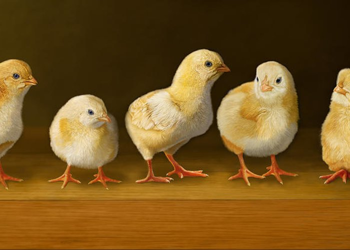 Chicks Greeting Card featuring the digital art Five Chicks Named Moe by Bob Nolin