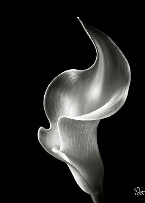 Flower Greeting Card featuring the photograph Flame Calla Lily In Black And White by Endre Balogh