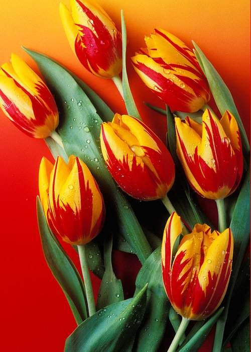 Tulip Greeting Card featuring the photograph Flame Tulips by Garry Gay