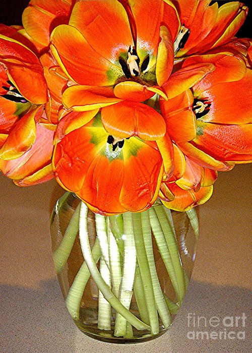 Nature Greeting Card featuring the photograph Flaming Tulips In A Vase by Lucyna A M Green