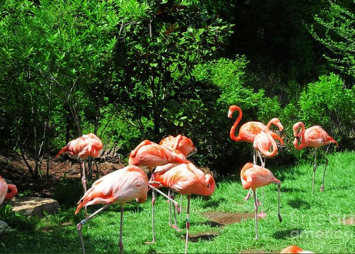 Flamingo Greeting Card featuring the photograph Flamingo Party by Kathleen Struckle