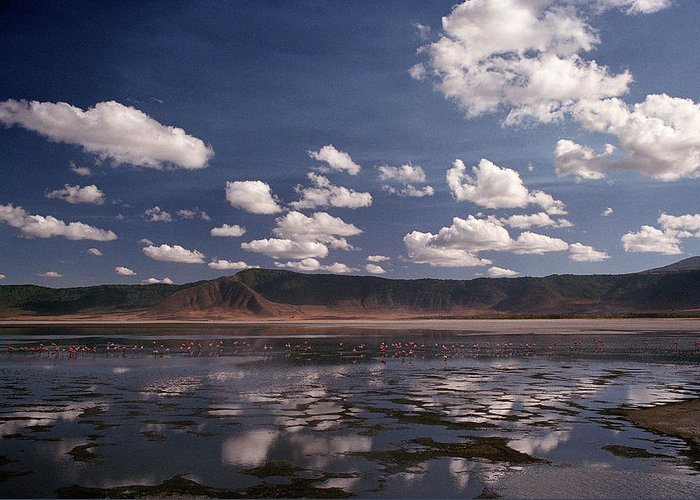Ngorongoro Crater Greeting Card featuring the photograph Flamingos by Marcus Best