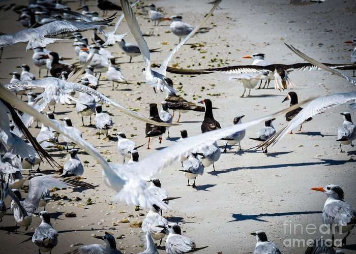 Seagulls Greeting Card featuring the photograph Flight by Marilee Noland