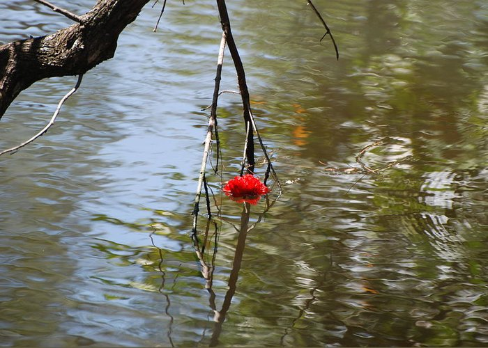 Water Greeting Card featuring the photograph Floating Flower by Rob Hans