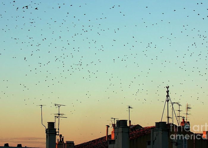 Animal Greeting Card featuring the photograph Flock Of Swallows Flying Over Rooftops At Sunset During Fall by Sami Sarkis