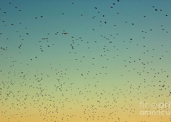 Animal Greeting Card featuring the photograph Flock Of Swallows Flying Together At Sunset by Sami Sarkis
