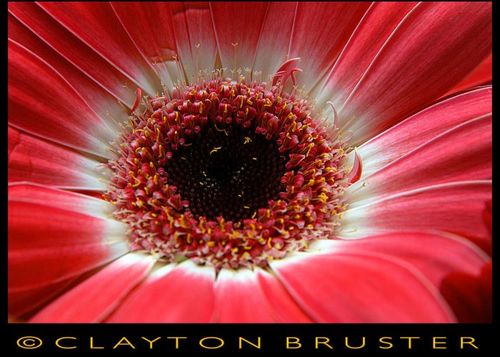 Clay Greeting Card featuring the photograph Floral by Clayton Bruster