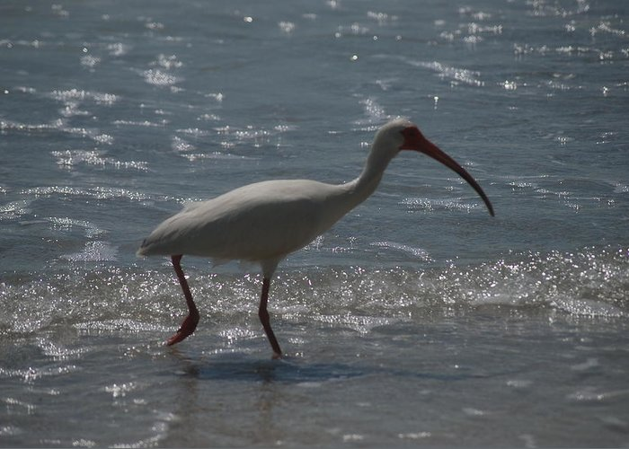 Florida Greeting Card featuring the photograph Florida Ibis 2 by Lisa Gabrius