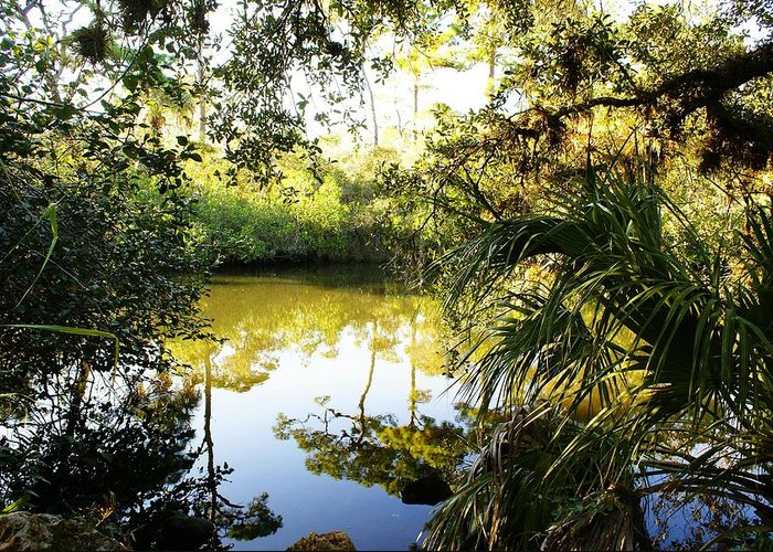 Florida Greeting Card featuring the photograph Florida Of Olde by Florene Welebny