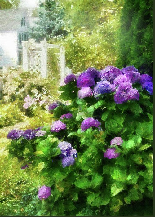 Suburbanscenes Greeting Card featuring the photograph Flower - Hydrangea - Lovely Hydrangea by Mike Savad