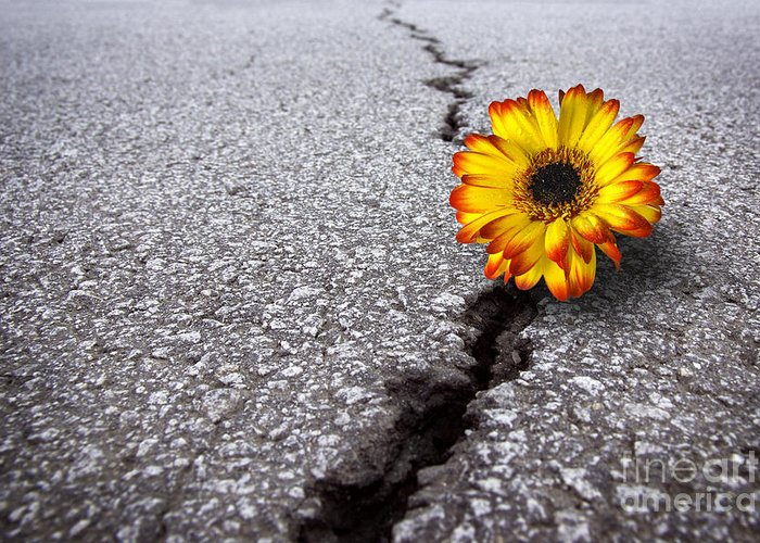Abstract Greeting Card featuring the photograph Flower In Asphalt by Carlos Caetano