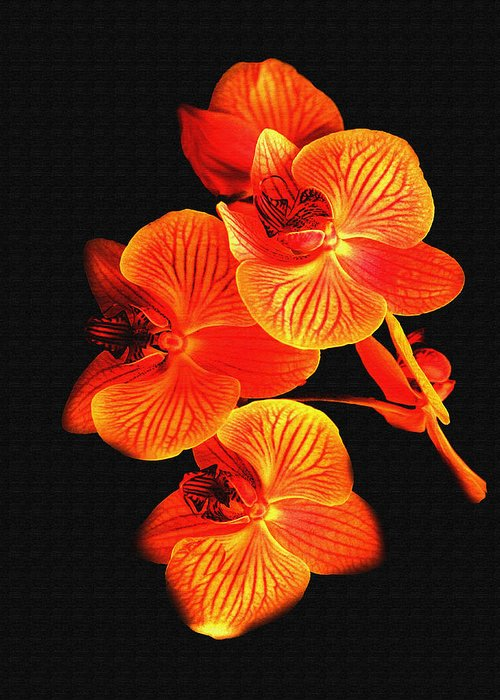 Flower Greeting Card featuring the photograph Flower by Ralph Perdomo