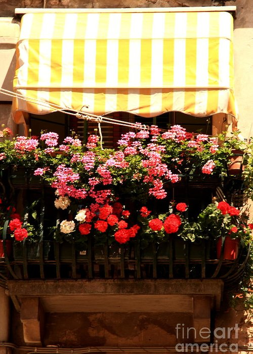 Flowers Greeting Card featuring the photograph Flowers And Awning In Venice by Michael Henderson