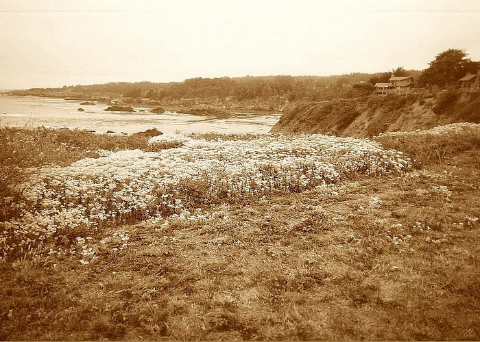 Seascape Greeting Card featuring the photograph Flowers On The Bluff by Maggie Cruser