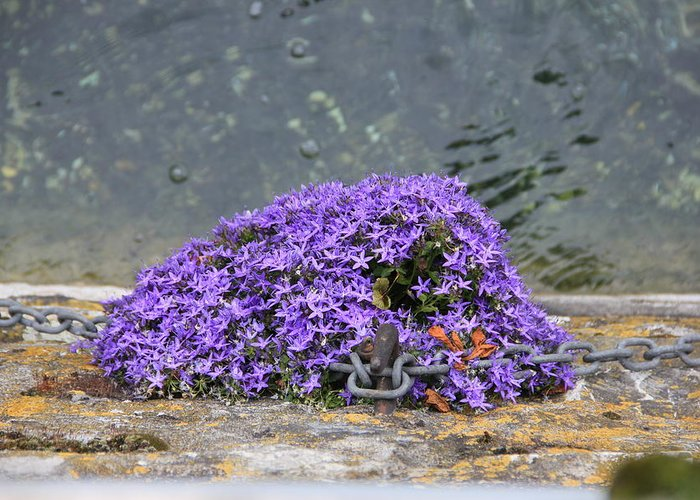 Geneva Greeting Card featuring the photograph Flowers On The Stone Wall by Nurlan Alymbaev