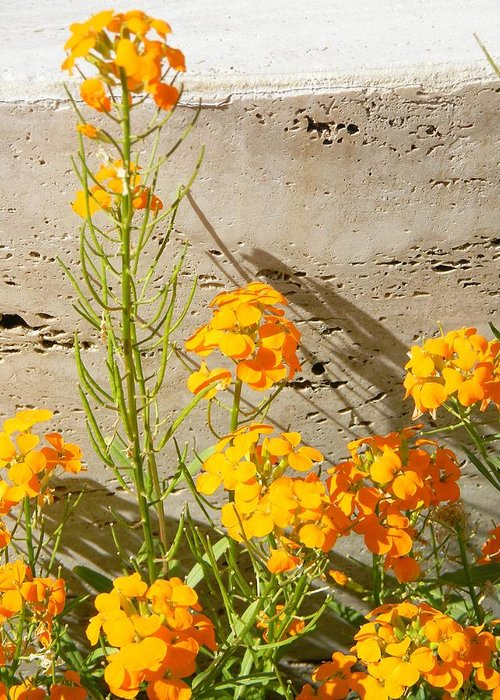 Orange Greeting Card featuring the photograph Flowers Orange by Warren Thompson