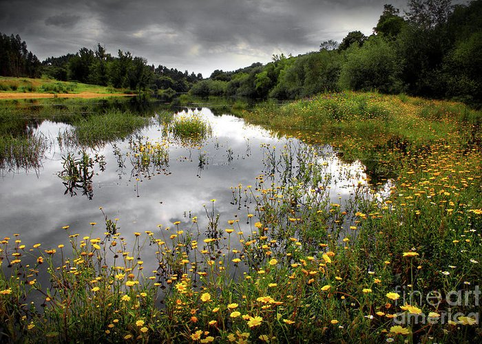 Atmosphere Greeting Card featuring the photograph Flowery Lake by Carlos Caetano
