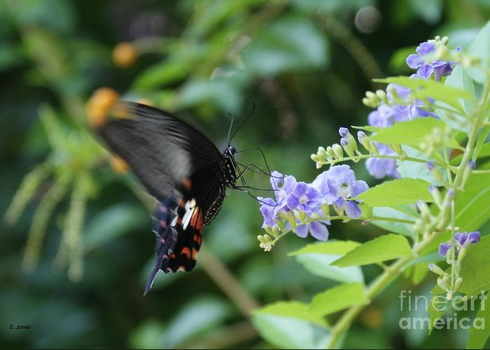 Butterfly Greeting Card featuring the photograph Fly In Butterfly by Shelley Jones