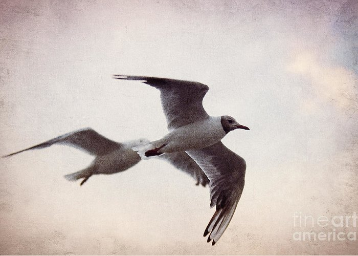 Gull Greeting Card featuring the photograph Flying by Angela Doelling AD DESIGN Photo and PhotoArt