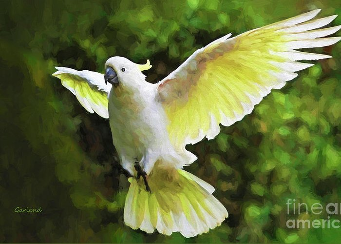 Flying Cockatoo Greeting Card