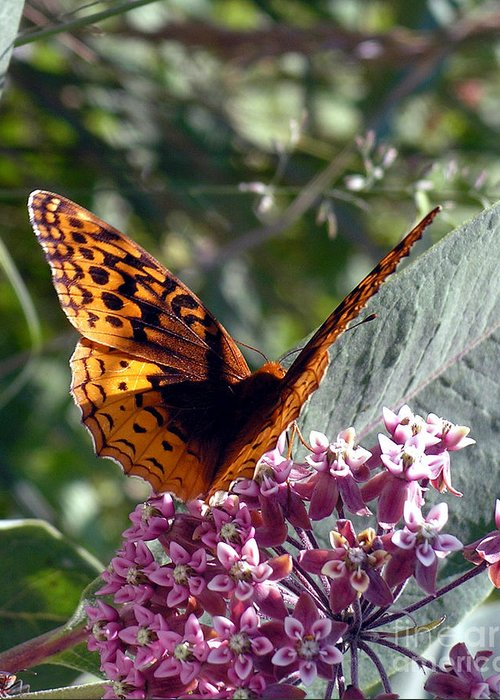 Monarch Butterfly Greeting Card featuring the photograph Flying Jewel by Scott Heister