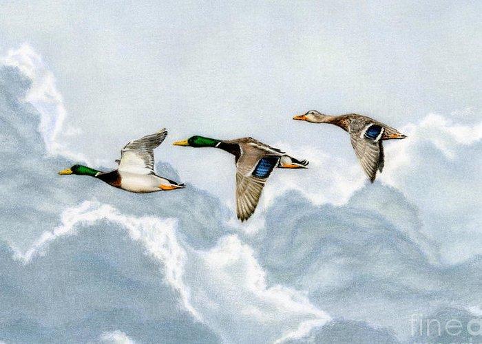 Ducks In Flight Greeting Cards