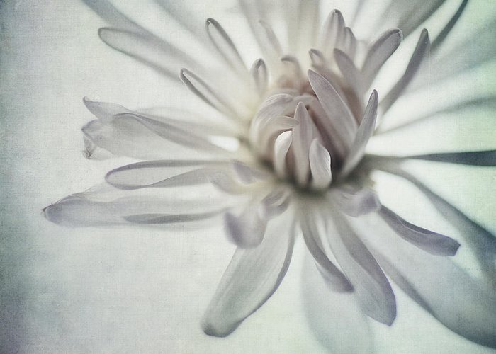 Close Up Floral Photographs Greeting Cards